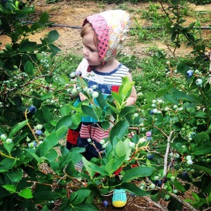 Blueberry picking on Long Island